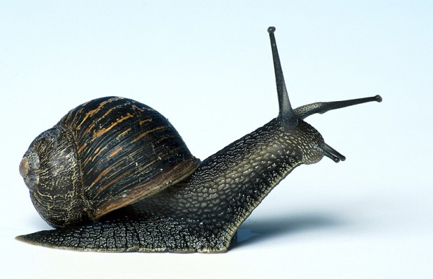 "Scientists Have Figured Out the Actual Definition of ""A Snail's Pace"""